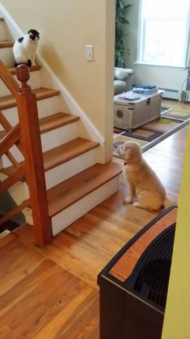 Dog-Cat Relationships Are Very Complicated (40 pics)