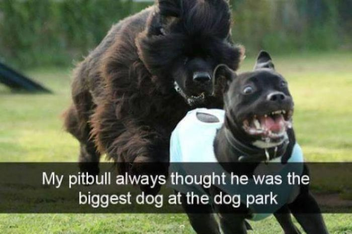 Funny Animals (39 pics)