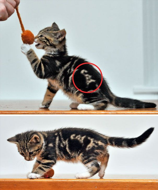 Cats With The Craziest Fur Markings Ever (25 pics)