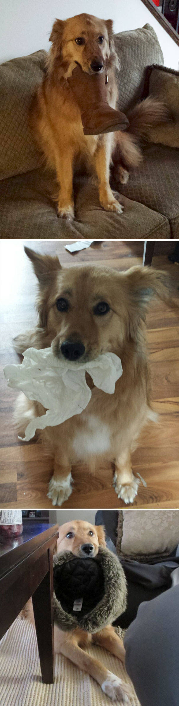 Pets Express Their Love To Humans By Bringing Them Gifts (39 pics)