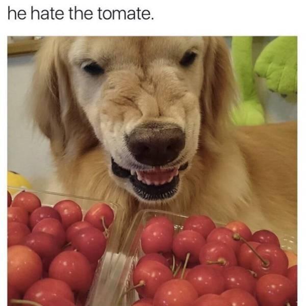 Food Memes (28 pics)