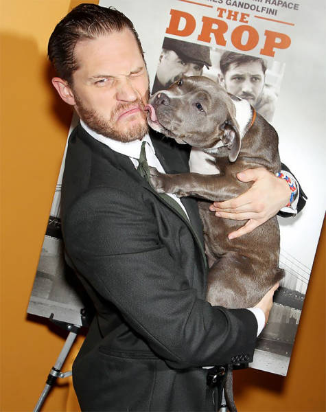 Tom Hardy Knows How To Melt Hearts All Over The Internet (31 pics)