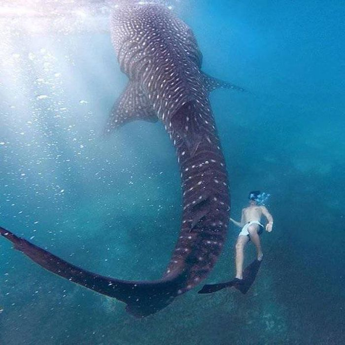 Giants Are Closer Than You Might Think (50 pics)