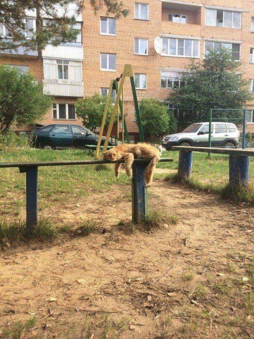 Funny Animals (40 pics)