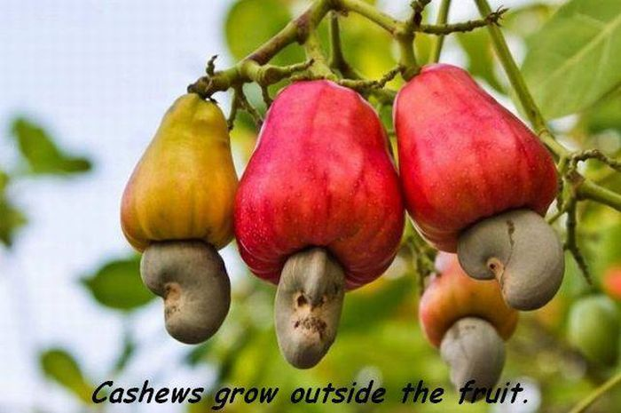 These Foods Actually Grow In Some Unexpected Ways (20 pics)