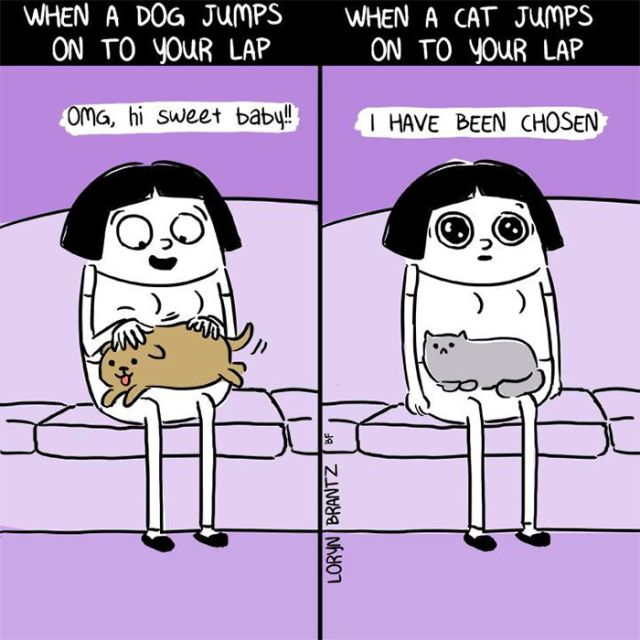 The Differences Between Cats And Dogs (25 pics)