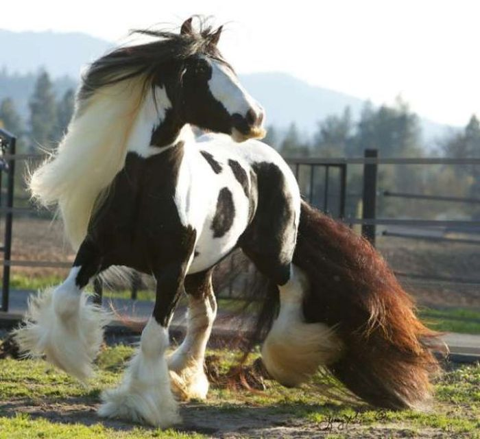 Horses With Moustaches (10 pics)