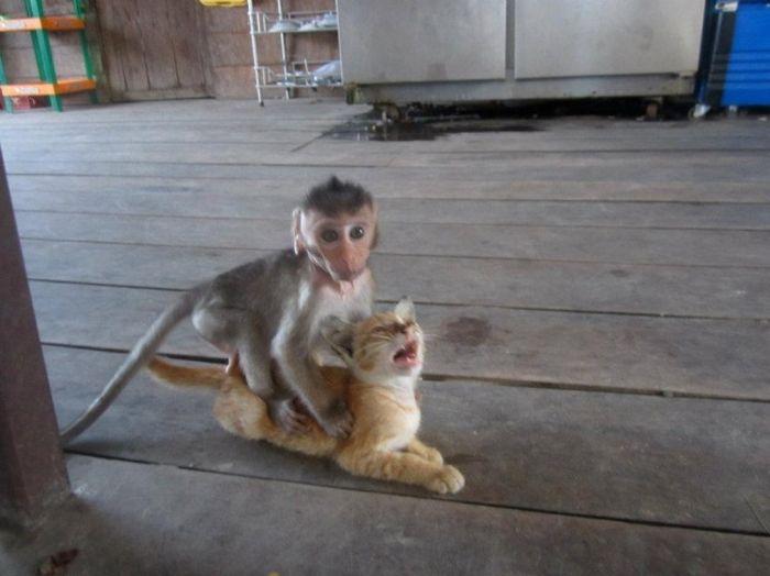 Funny Animals (25 pics)