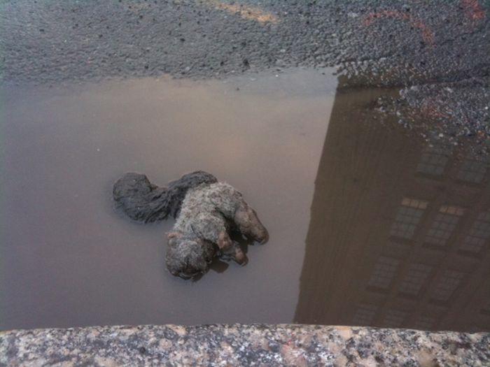 Sad Stuff You See on the Streets (25 pics)