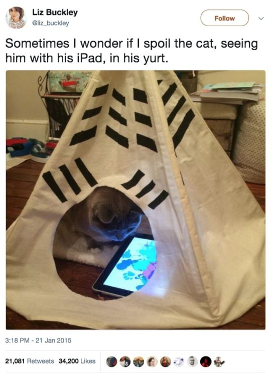 Funny Tweets About Cats (17 pics)