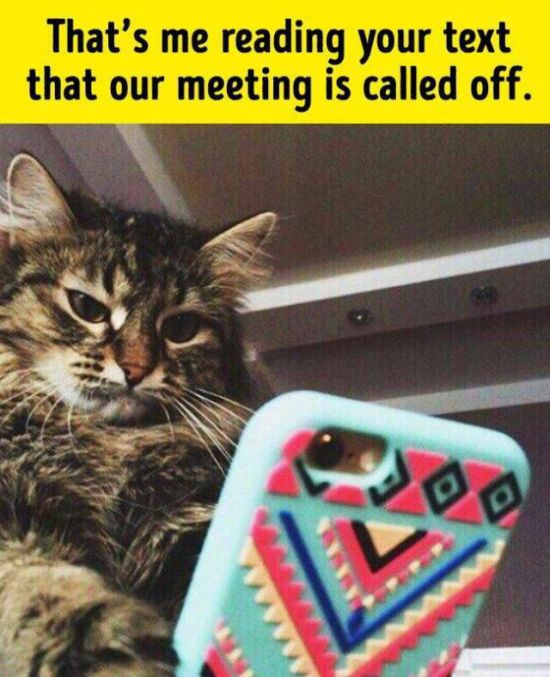 Animals Are Actually Not So Different From Us (22 pics)