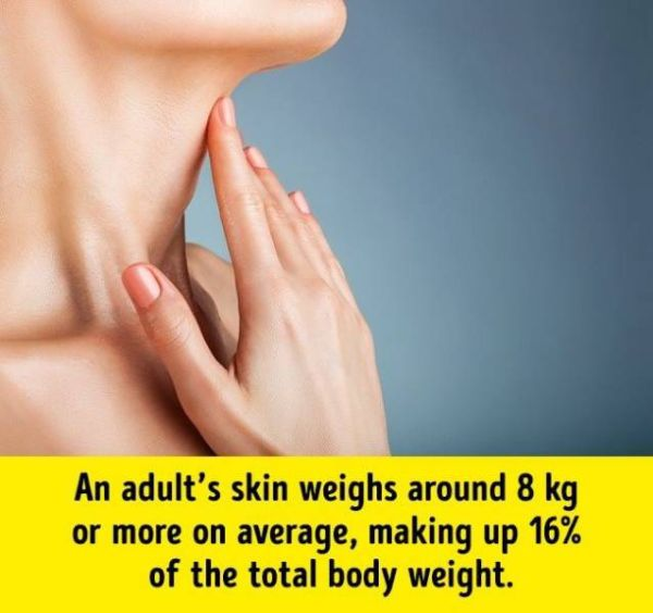 Facts About Human Body (17 pics)