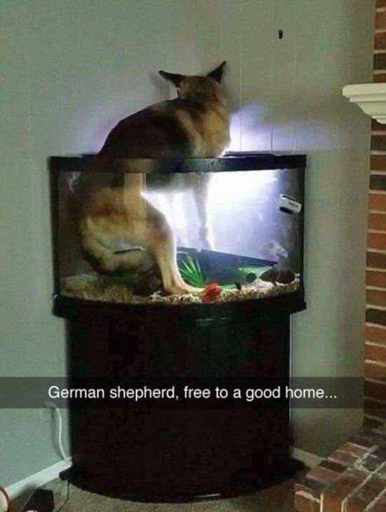 Funny Dogs On Snapchat (22 pics)