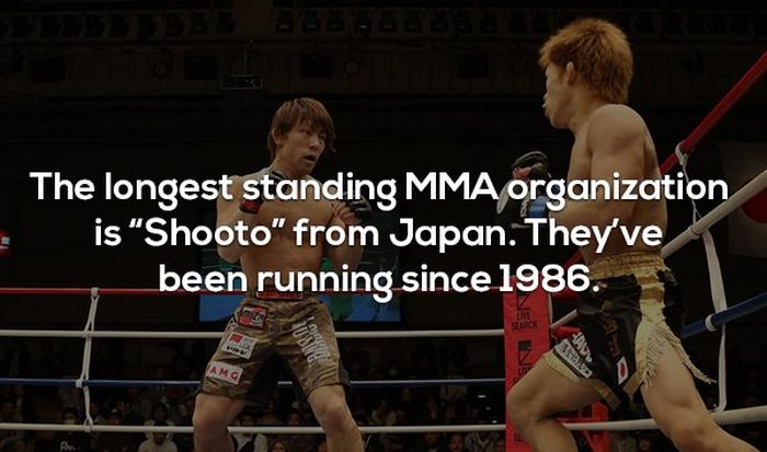 Interesting Facts About MMA and the UFC (17 pics)
