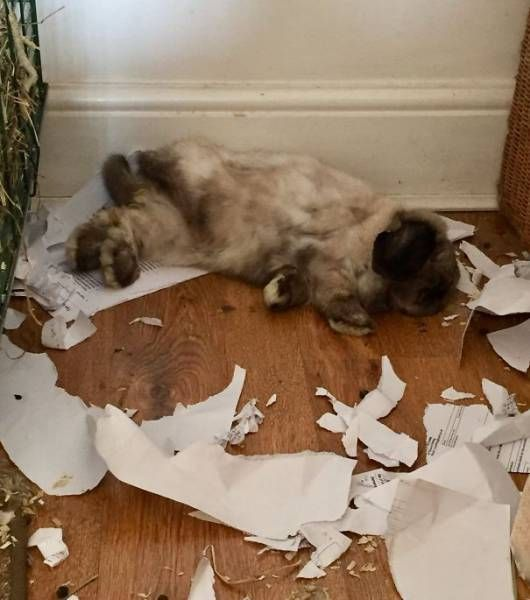 Pets Behaving Badly (39 pics)