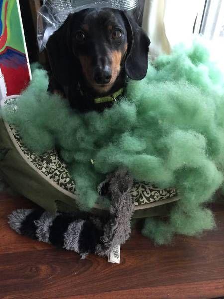 Pets Behaving Badly (39 pics)
