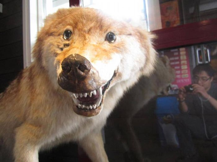 Taxidermy Fails (25 pics)
