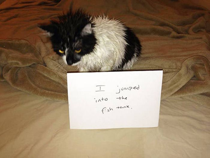 Cat Shaming (30 pics)