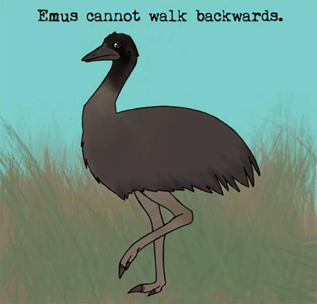 Animal Facts (30 pics)