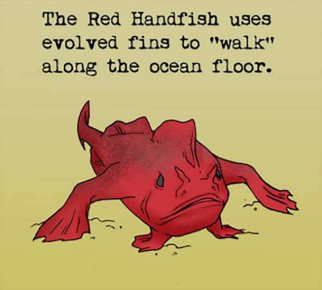 Animal Facts (30 pics)