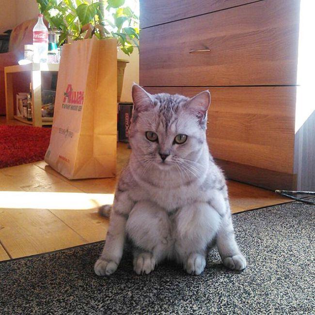 Cats Sitting (17 pics)