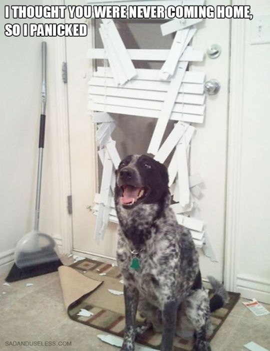 Proof That Dogs Are As Evil As Cats (17 pics)