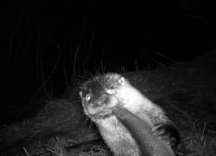 Animals Captured By Hidden Cams (39 pics)