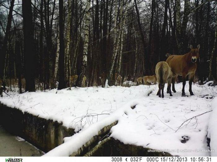 Chernobyl Animals Don't Look Like Mutants (54 pics)