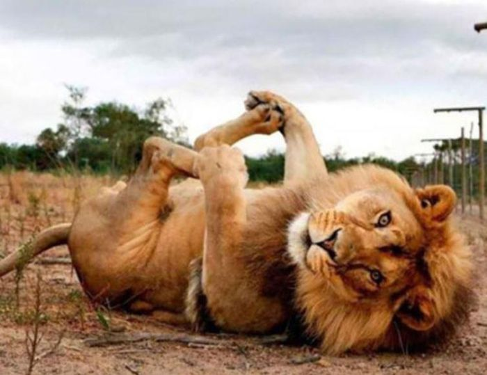Animals That Know How To Pose (14 pics)