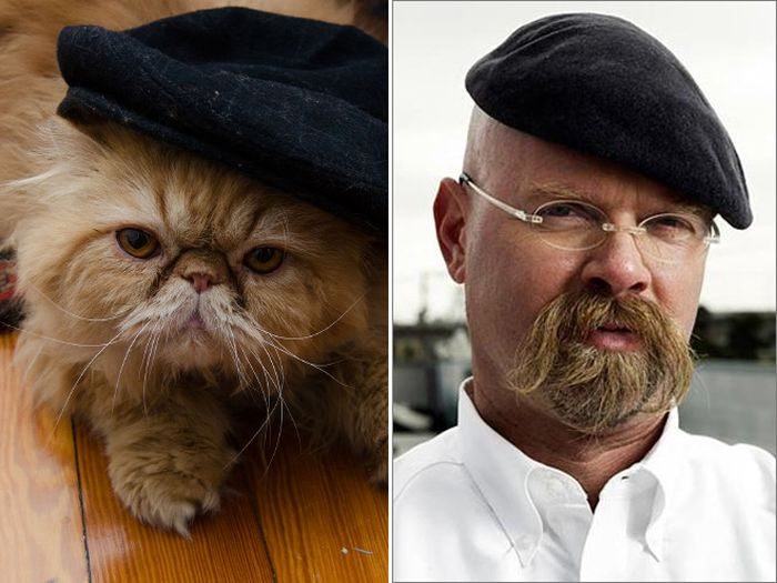 Cats That Look Like Celebrities (17 pics)