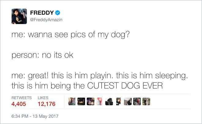Funny Dog Tweets (15 pics)