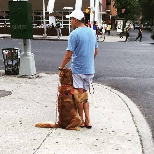 Dogs Are Awesome (15 pics)