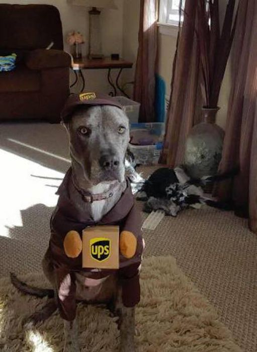 UPS Drivers Meet Lots Of Adorable Dogs And Internet Absolutely Loves The Photos (30 pics)