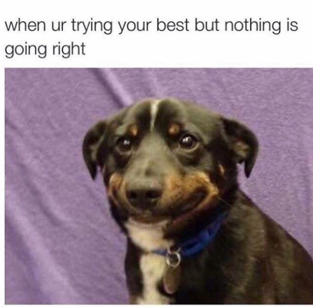 Great Memes (29 pics)