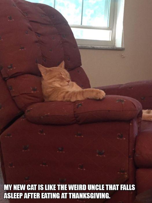 Cats Acting Weird (13 pics)