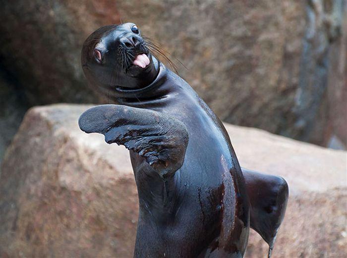 Funny Animals (35 pics)