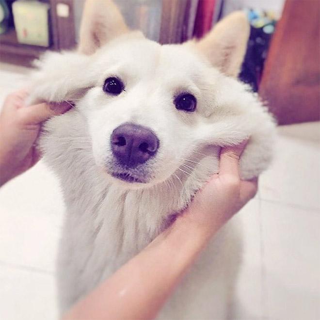 Squishy Dog Cheeks (18 pics)