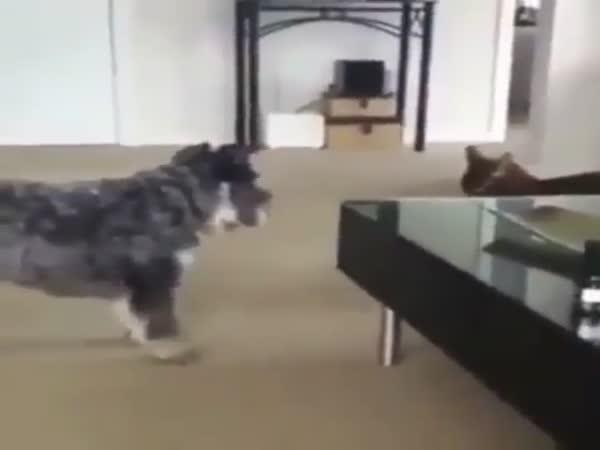 Graceful Cat vs Dog