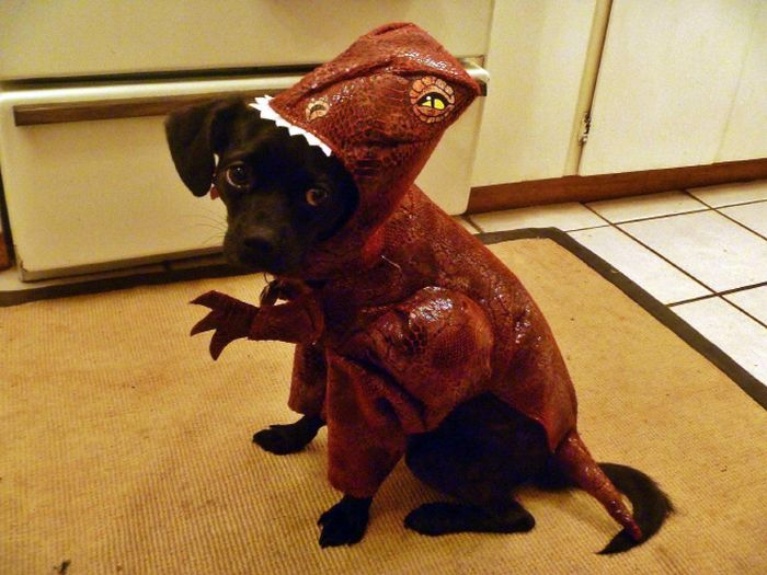 Animals Dressed as Other Animals (14 pics)