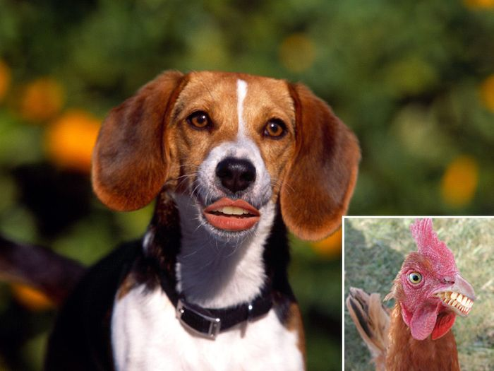 Animals With Human Mouths (20 pics)