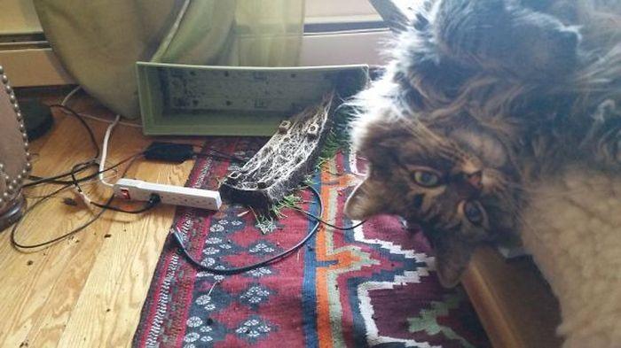 Bad Pets (31 pics)
