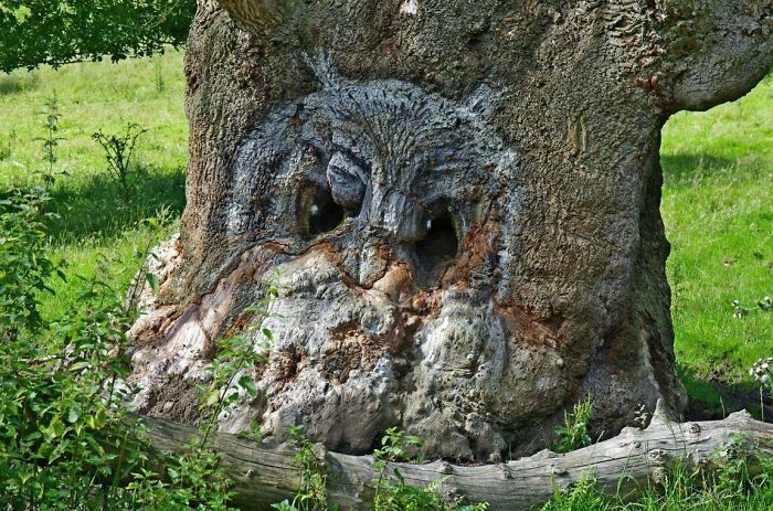 TheseTrees Will Make You Look Twice (26 pics)