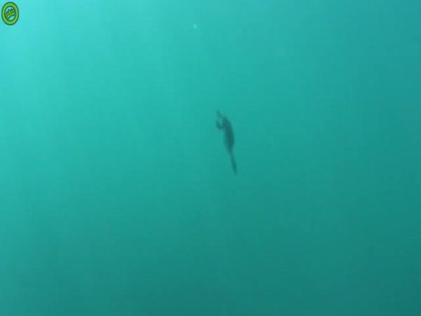 Diver Catches Bird Underwater