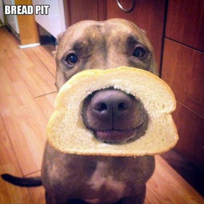 Funny Animals (23 pics)