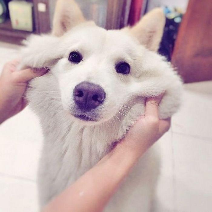 Squishy Dog Cheeks (19 pics)
