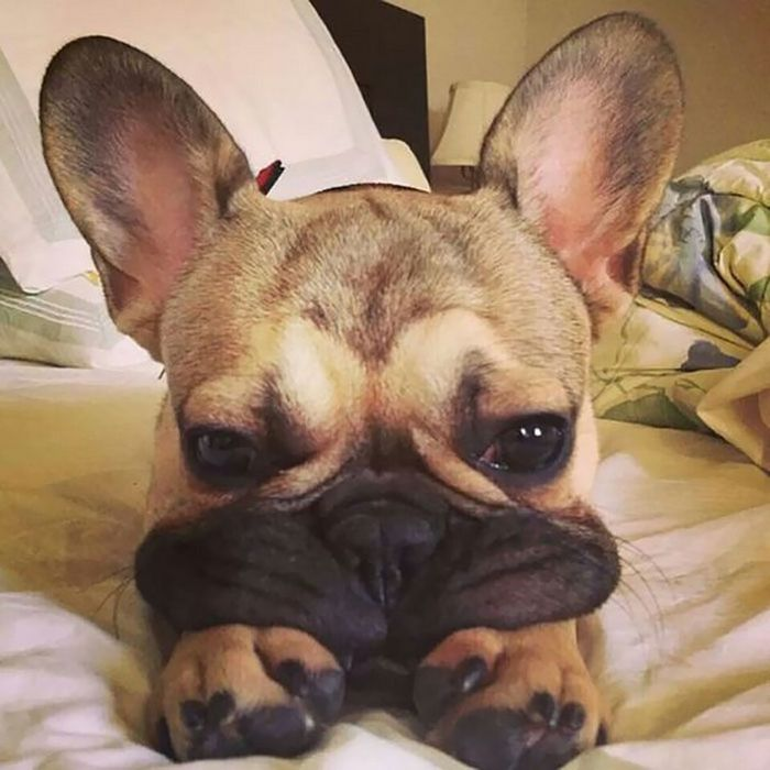 Squishy Dog Cheeks (19 pics)