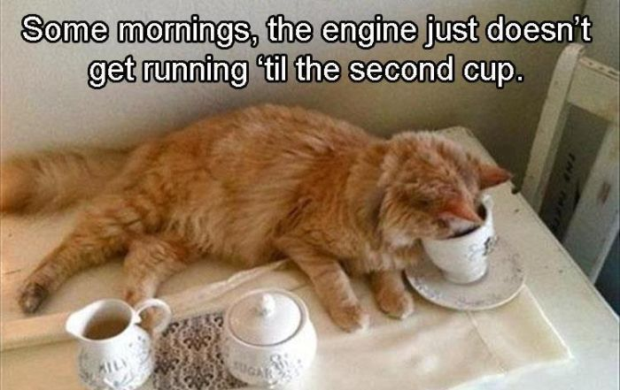 Funny Animals (21 pics)