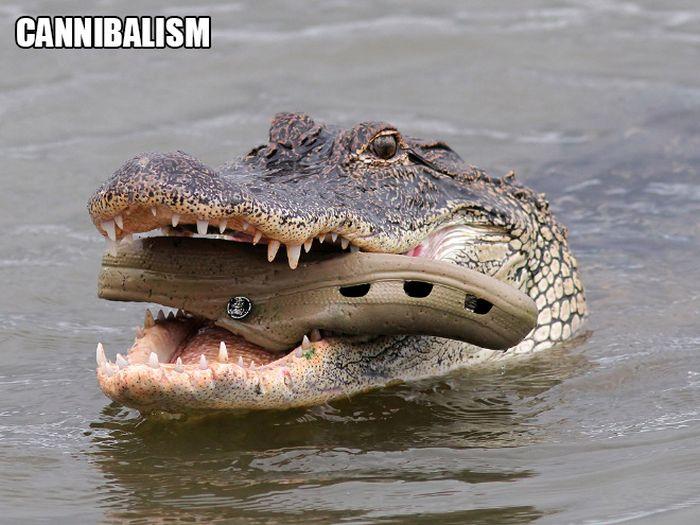 Animal Fails (18 pics)