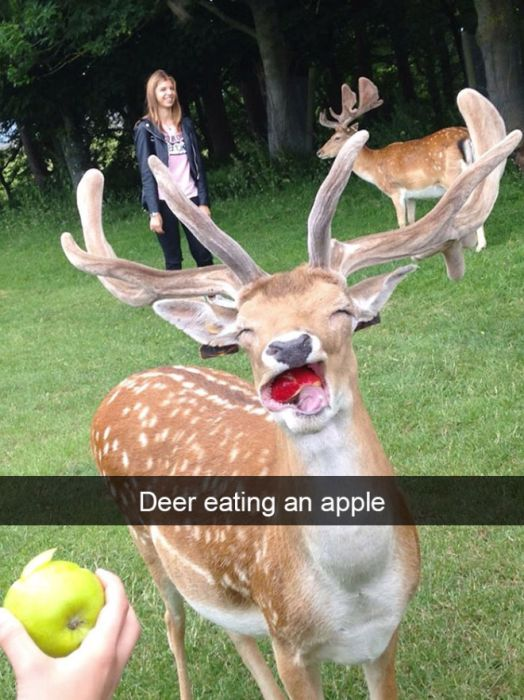 Funny Animal Snapchats (17 pics)