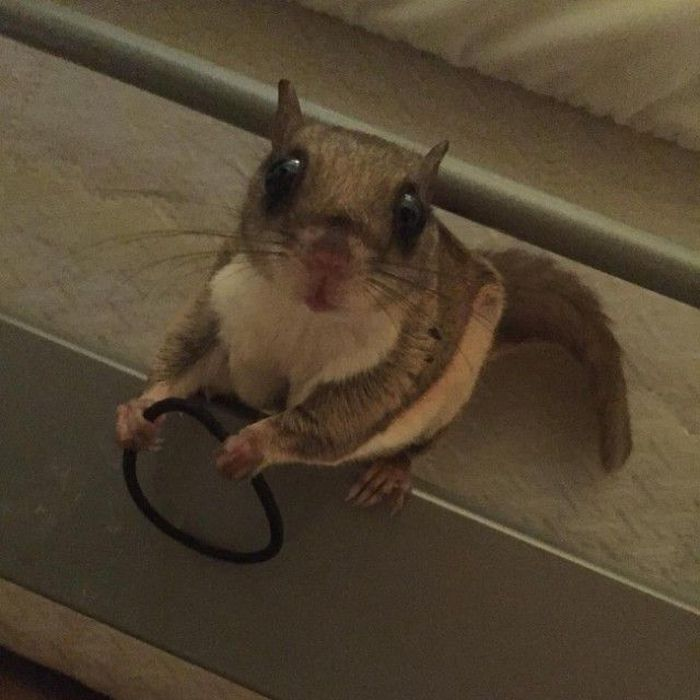 Busted Animals (25 pics)
